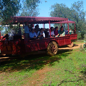 spain, seville, bulls visit spain, horse tour, bullfight, 4x4 tour, horse-draun carriage tour, bulls and horses welcome, bullfighting, capea tentadero, horseman and flamenco dancing, dressage, outdoor activities, bandits assault, romeria, craft, workshops, hunting, falcontry, flamencas parties, work meetings, tastings